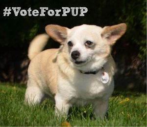 Vote for PUP - Benji